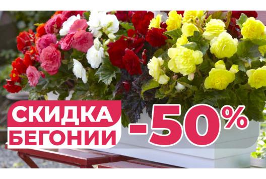 СУПЕР акция на бегонии! СКИДКА - 50 %