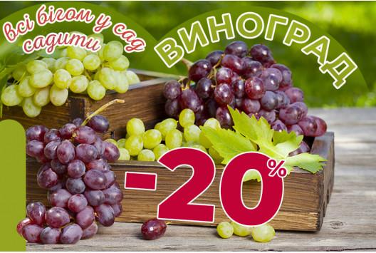 Смачний Виноград зі  знижками до -20%