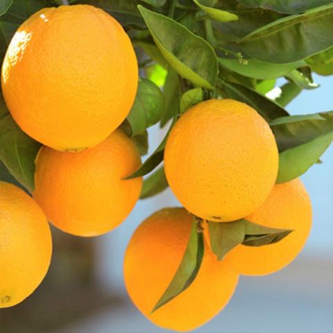 Апельсин Лайн Лате контейнер 2 л