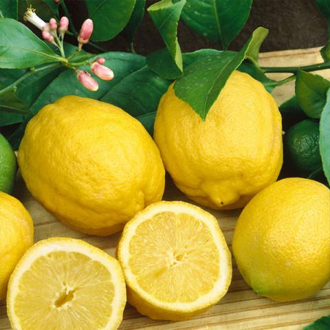 Лимон Эврика контейнер 1 л