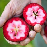 Яблуні з червоною м'якоттю
