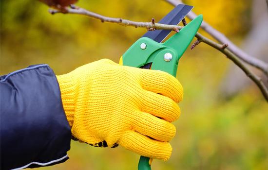 Загальні правила підготовки саджанців до посадки: обрізка крони та коренів
