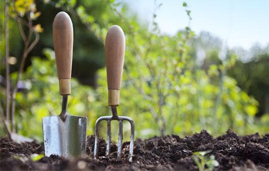 Сидерати – зелене добриво, висока родючість, поліпшення структури ґрунту