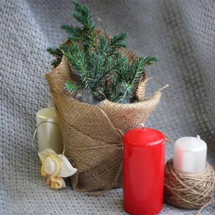 Ель Conica (Коника) Праздничная