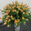 Лілія азіатська Apricot Fudge (лілія троянда)