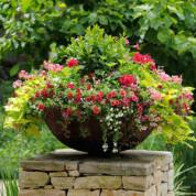 Цветы для выращивания в горшках