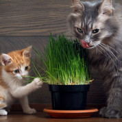 Суміш трав для котів