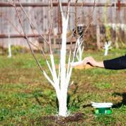 Средства для оброботки сада ранней весной и осенью