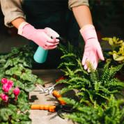 Удобрения и средства для комнатных растений