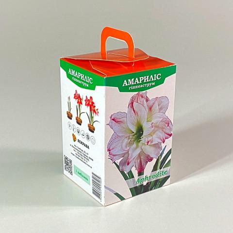 Гиппеаструм Aphrodite (подарочная упаковка)