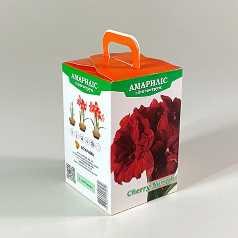Гиппеаструм Cherry Nymph (подарочная упаковка)