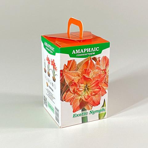 Гиппеаструм Eхotic Nymph (подарочная упаковка)