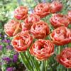 Тюльпан Махровый Copper Image