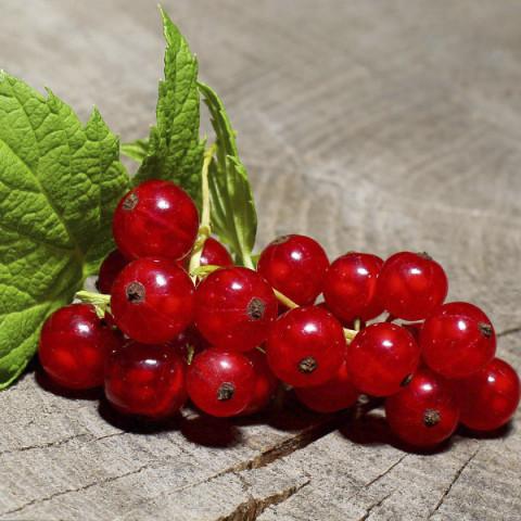 Смородина червона Самбурська