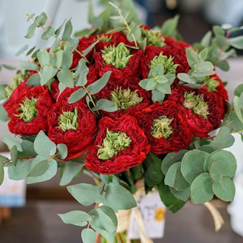 Роза Красный Глаз (Red Eye) штамб