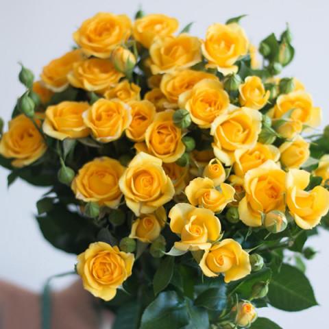 Роза Еллоу Бэйби (Yellow Baby)