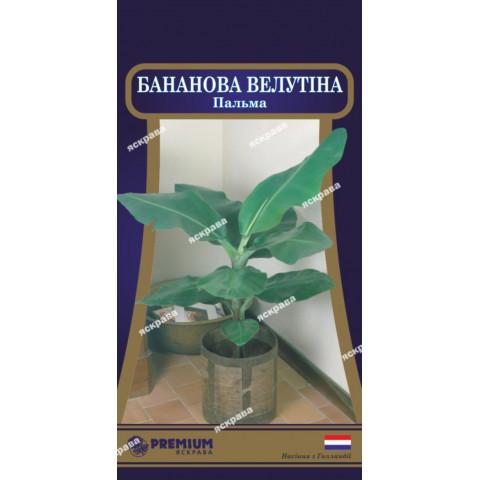 Пальма Бананова Велутіна (5 насінин)