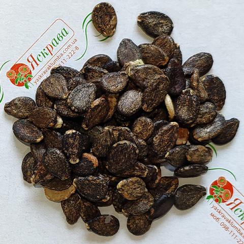 Арбуз Цельнолистный (семена) 100 г