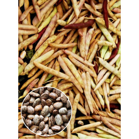 Фасоль кустовая Перепелка (семена) 500 г