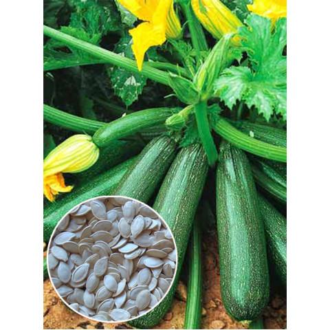 Кабачок зеленый Аэронавт (семена) 100 г