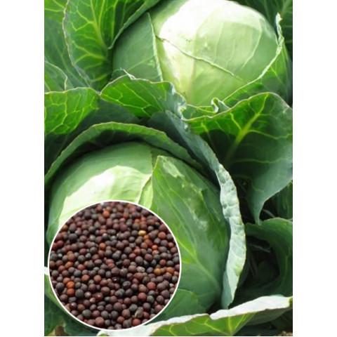 Капуста белокочанная Белорусская (семена) 50 г