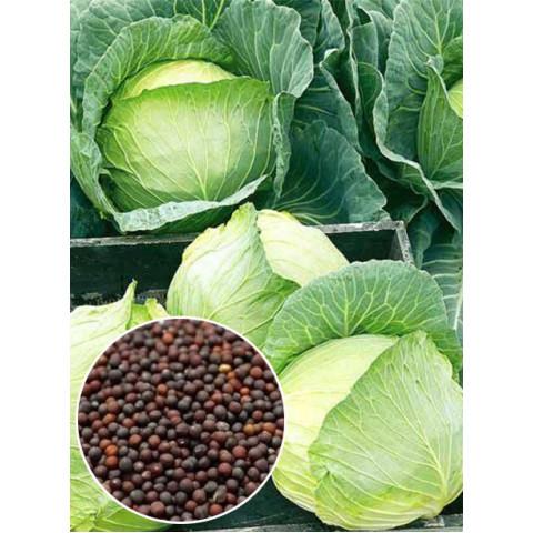 Капуста белокочанная Белоснежка (семена) 50 г