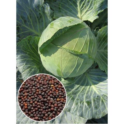 Капуста белокочанная Дитмаршер (семена) 50 г