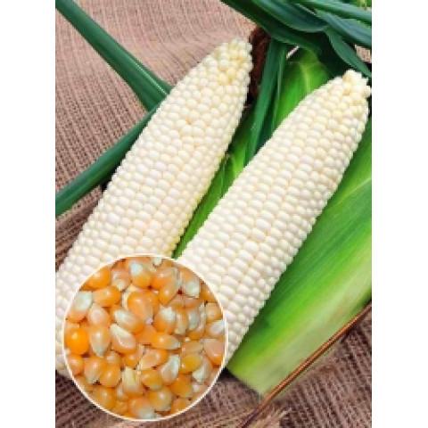 Кукуруза белая Сахарное чудо (семена) 500 г