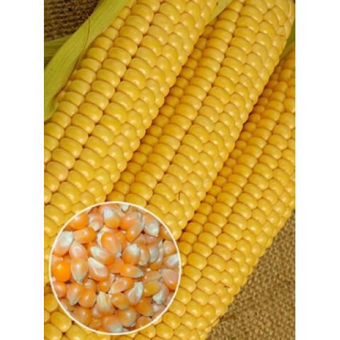 Кукуруза Тамара (семена) 500 г