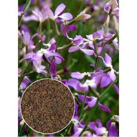 Матиола Ночная Красавица (семена) 100 г
