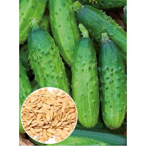 Огурец корнишон Анулька F1 (семена) 50 г