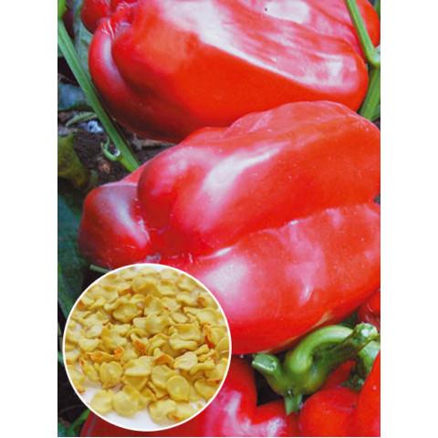 Перец Кубовидный толстостенный (семена) 20 г