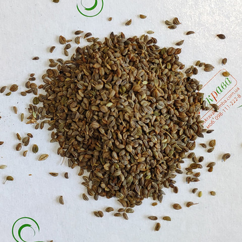 Петрушка Берлинская корневая (семена) 100 г