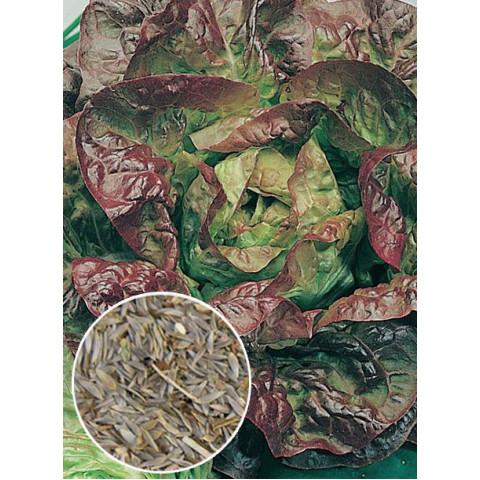 Салат красный Четыре сезона (семена) 100 г