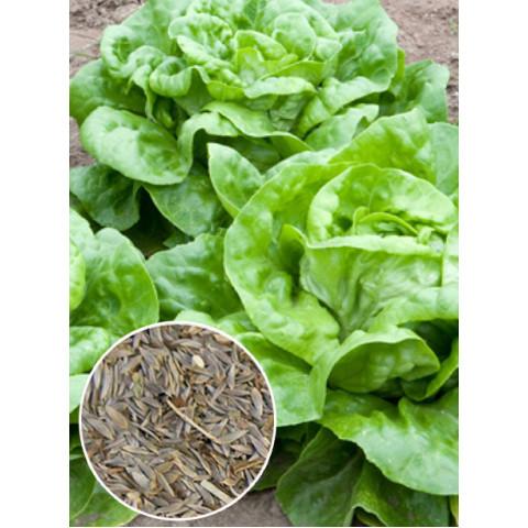 Салат головчастий Годар (насіння) 100 г