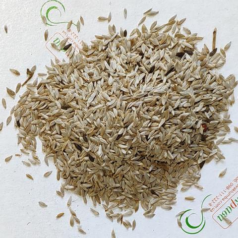 Салат кочанный Годар (семена) 100 г