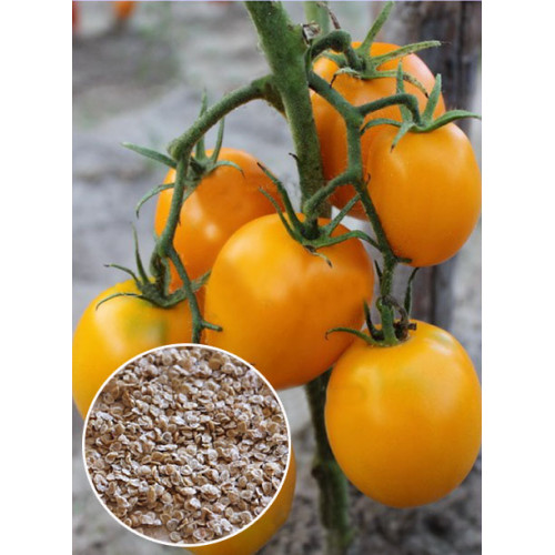 томат медовый купить семена