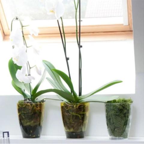 Горщик пластмасовий для орхідей Квадрат безбарвний 12х12 см