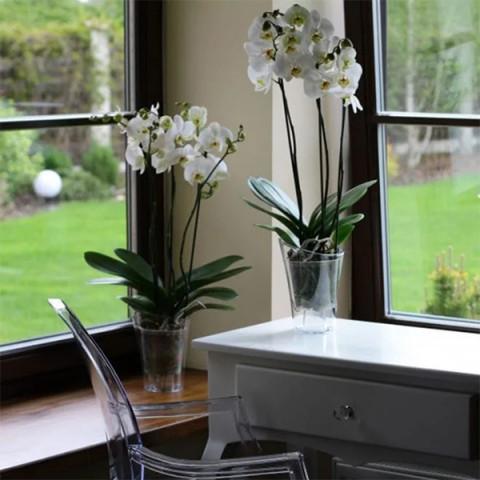 Горщик пластмасовий для орхідей Венус безбарвний 14.5 см