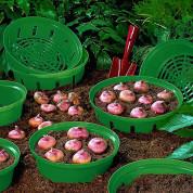 Корзинки для луковиц