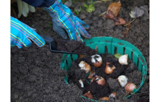 Способы защиты луковиц в грунте от грызунов: как уберечь свои посадки