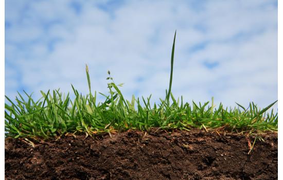 Визначення кислотності ґрунту. Основні методи коригування кислотності