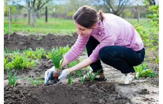 Основні роботи в саду в травні: завершуємо посівний сезон