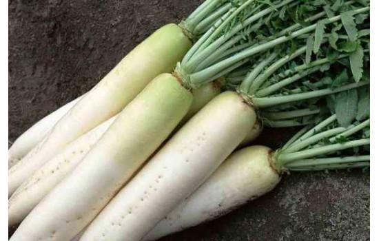 Дайкон або японська редька: популярна овочева культура, секрети вирощування