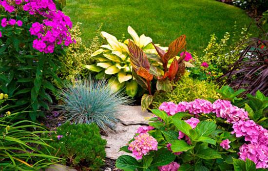 Клумба безперервного цвітіння: створюємо міксбордер з багаторічників, підбір рослин, схема посадки
