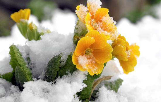 Сеем цветы поздней осенью – секреты подзимнего посева