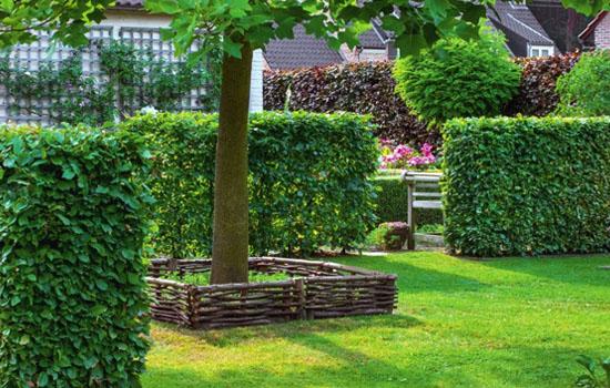 Живопліт: формуємо простір саду, варіанти та вибір рослин