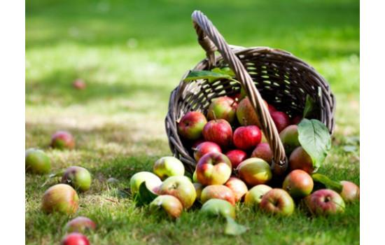 Основні роботи в саду в серпні: завершуємо літній сезон