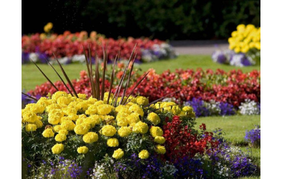 Яскрава клумба з квітня по листопад. Варіанти оформлення для безперервного цвітіння