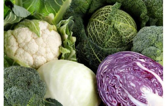 Капуста – королева овочів: все що варто знати про види та сорти